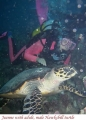 hawksbill-and-jeanne
