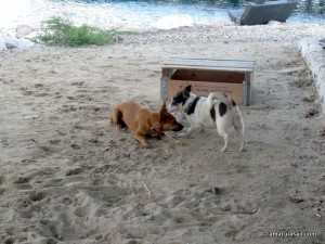Chui & Tugboat pup playing